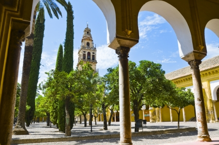 Orange trees garden in the Mezquita in Cordoba, Spain