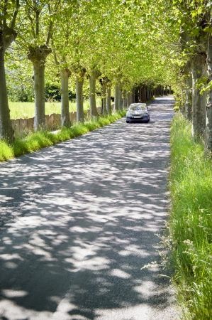 car trunk: Car on a countryside road with plane trees
