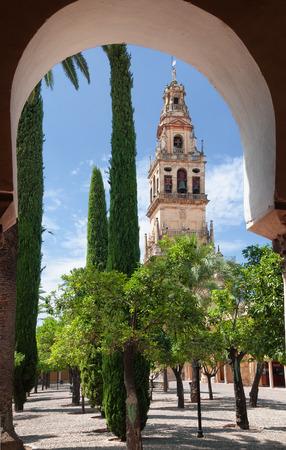 Albero arancione cortile Mezquita di Cordoba, Spagna
