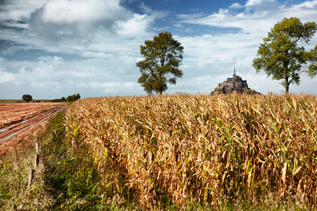 mont saint michel: Mont saint Michel and corn field in Normandy, France Stock Photo