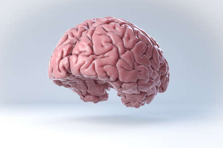 cortex: Isolated 3D Human Brain Illustration. Science Anatomy Background. Stock Photo