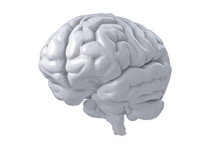 Geïsoleerde 3D menselijke hersenen illustratie. Science Anatomy Background.