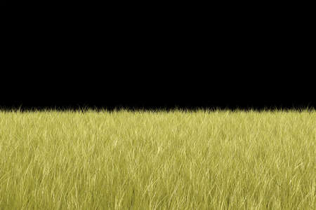 echo: 3D Grass Background