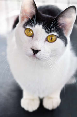pussy yellow: A cat with cute hypnotic eyes