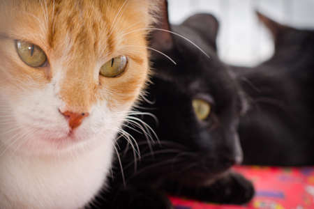 hypnotic: An orange cat with hypnotic eyes and black cats behindp