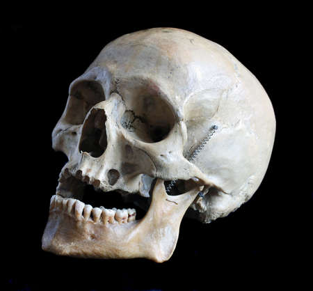 skull background: Skull of the person close up on a black background
