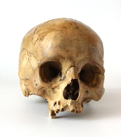 horror skull: Human skull on a white background.