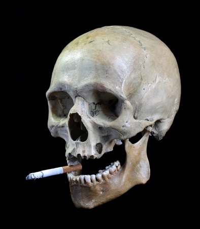 Skull with a cigarette.Skull of the person with a cigarette in a teeth. photo