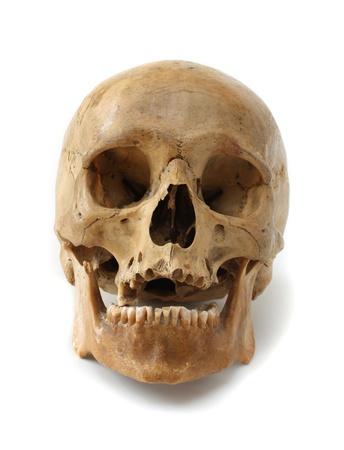 Menselijke schedel op een witte achtergrond.