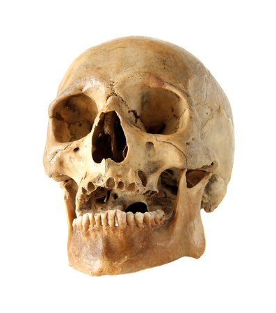 Human skull on a white background. Stock Photo - 16027728