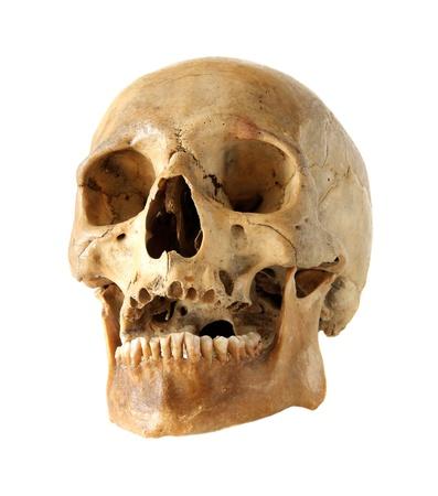 human jaw bone: Human skull on a white background.