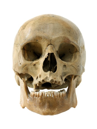 Human skull isolated on a white background. Stock Photo