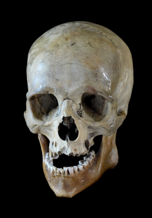Human skull isolated on a black background. Stock Photo - 21460558