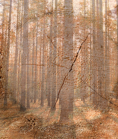 cutoff: Double exposure trees in the wood against the cut-off tree.