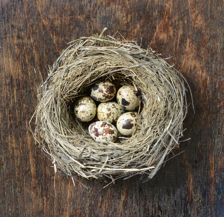 straw twig: Quail eggs in a straw nest on a wooden background.