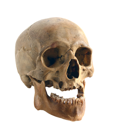 Human skull isolated on a white background. Foto de archivo