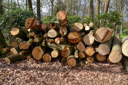 sawed: The sawn trees in the wood.
