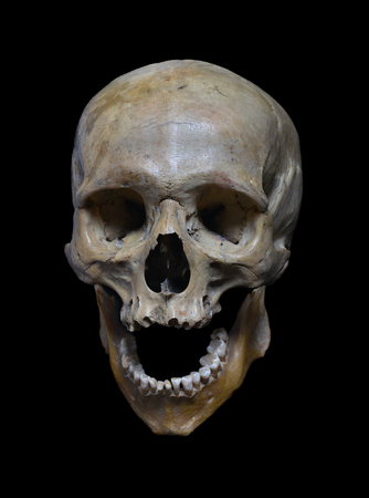 黒い背景に人間の頭蓋骨。