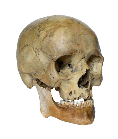 Human skull close up on a white background.