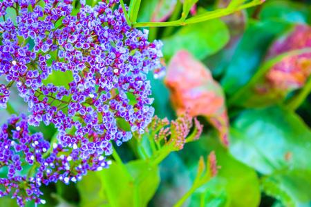 violet flowers: small violet flowers ,purple flowers Stock Photo
