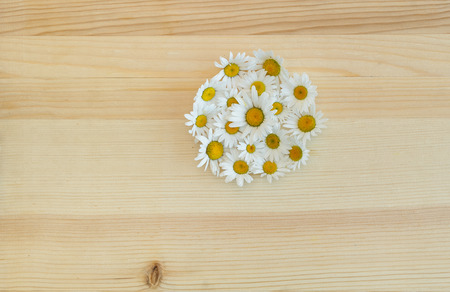 daisies on a wooden table in a circle Stock Photo