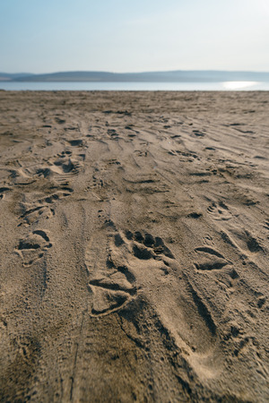 escaped: Gull and funny man left footprints in the sand . They escaped into the sea.