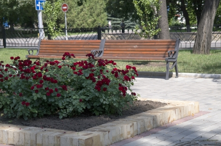 Park bench and city flower on a bed, a red rose. photo