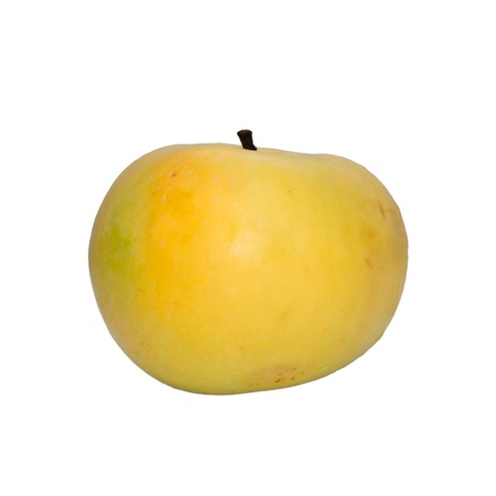 One mature yellow apple on a white background  photo