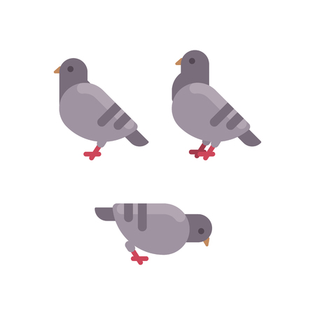 Set of grey pigeon flat icons. Rock dove minimal flat illustration Stock Vector - 96800411
