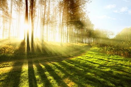rayos de sol: Bosque nublado por la mañana temprano Foto de archivo