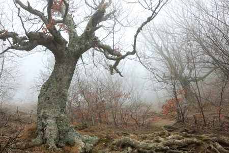 Magic forest in the fog