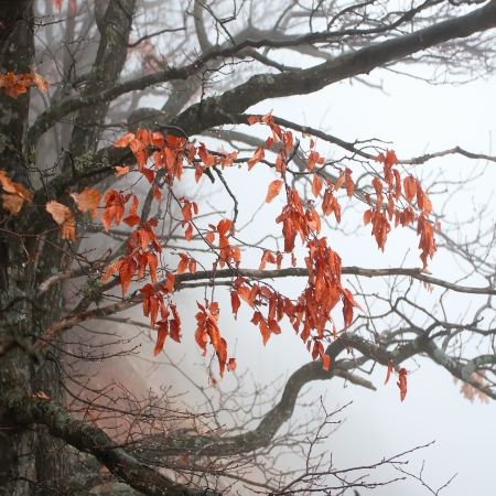 rainy day: Autumn tree branches in the fog