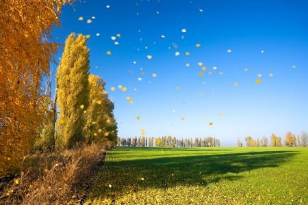 Autumn scenery Imagens