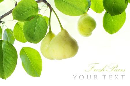 Frescas peras maduras en rama frontera aislado en blanco, con copia espacio