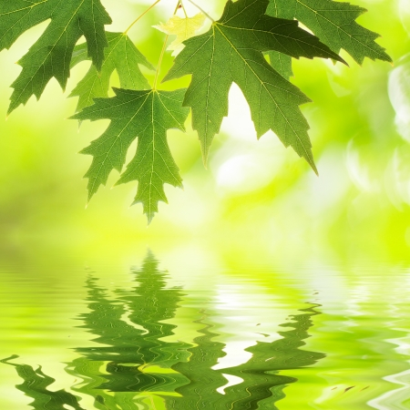 Green leaves reflecting in water photo