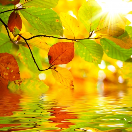 Autumn branch leaves reflected in water