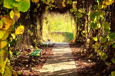 garden bench: Autumn park alley