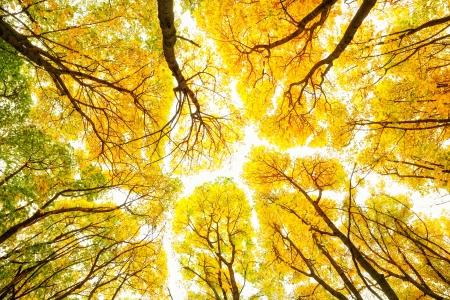 view through: Autumn trees pattern