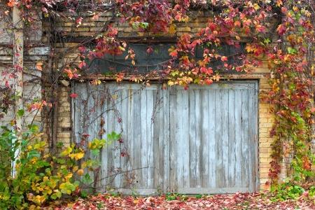 Alte hölzerne Tür mit einer Mauer und Kletterpflanzen Standard-Bild - 16153953