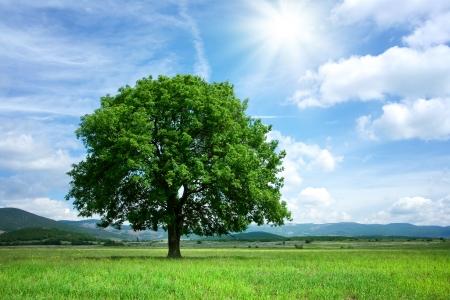 グリーン フィールドのツリー