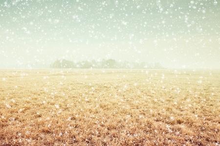 neige qui tombe: Paysage d'hiver Banque d'images