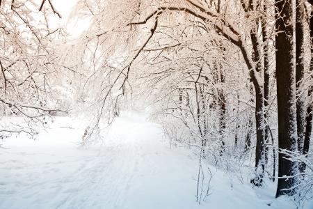 Winter scene Imagens