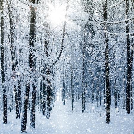 neige qui tombe: La for?t d'hiver Banque d'images