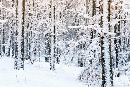 neige qui tombe: Scène d'hiver