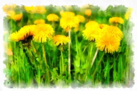 Spring flowers meadow Stock Photo - 17511420