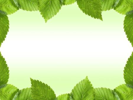 Green leaves frame photo