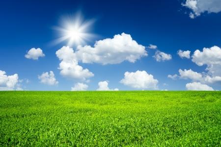 crop harvest: Green field
