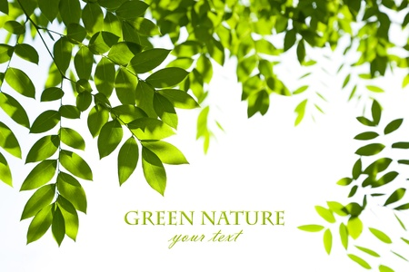 Nature background leaves frame Stock Photo - 18066812