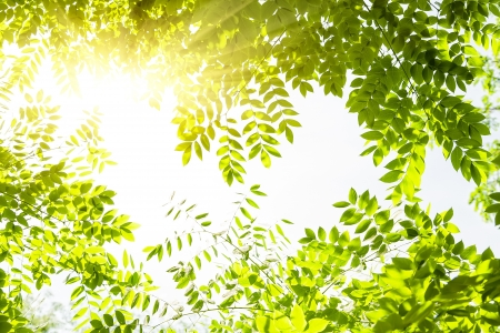 Nature background leaves frame Stock Photo - 18855564