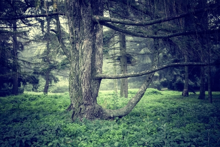 Forest scenic photo